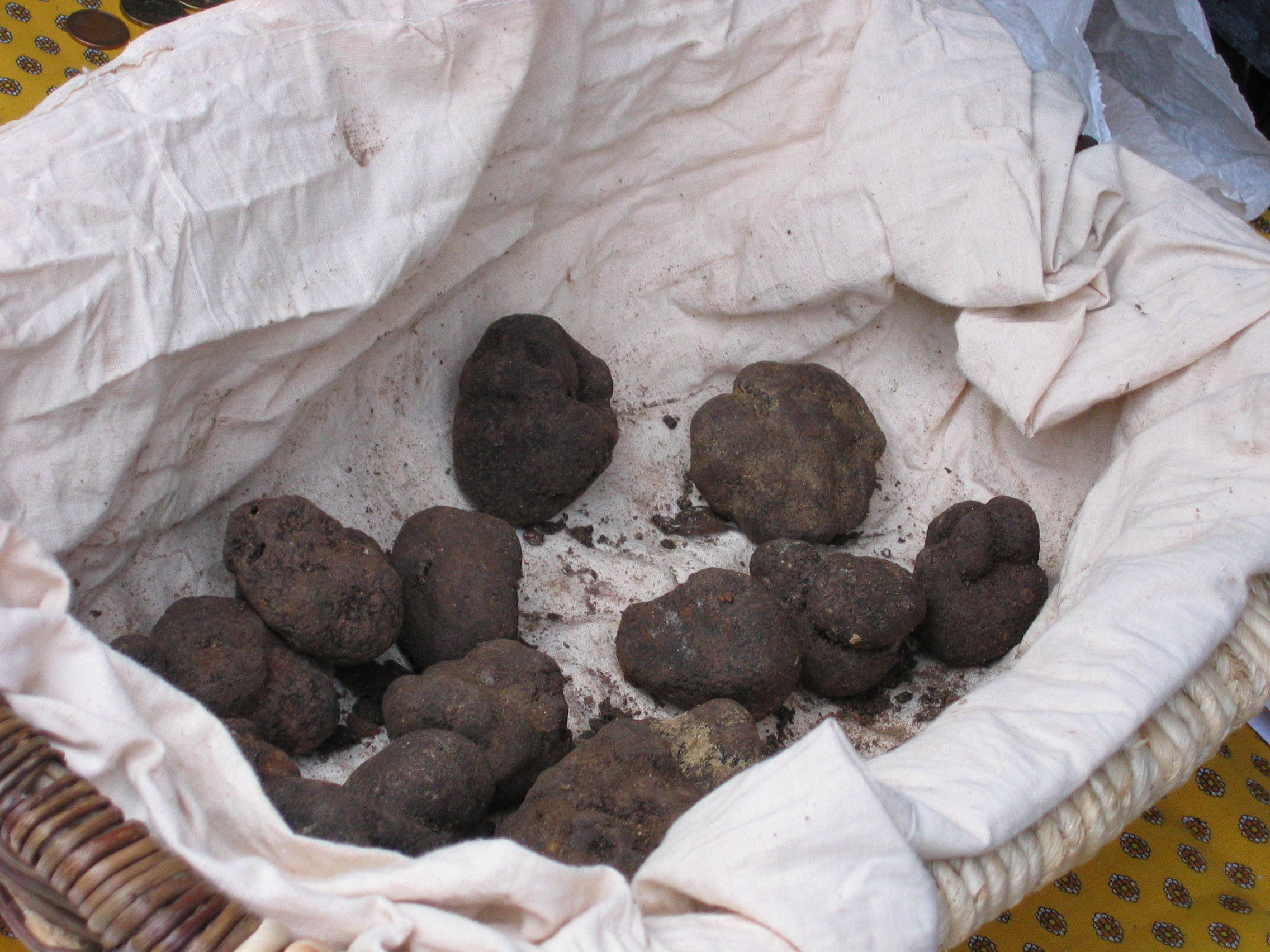 Photo taken by Poppy in January 2006. Truffle from Mont-Ventoux fra Wikpiedia